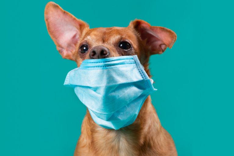 Le Coronavirus (COVID-19) est-il transmissible aux animaux de compagnie