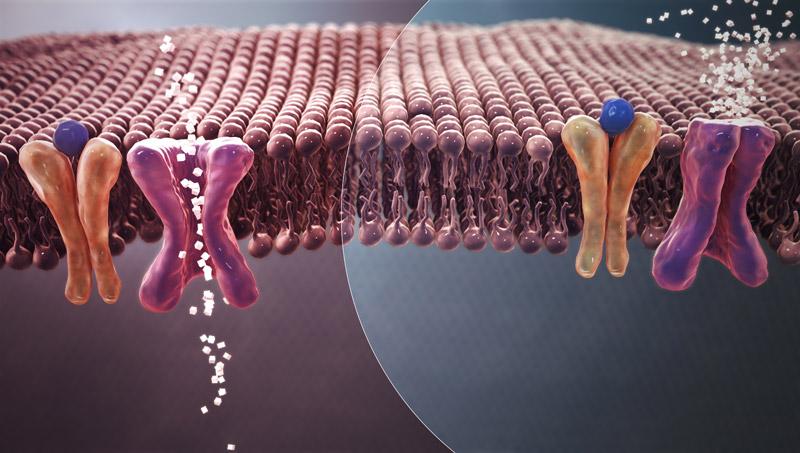 Illustration : cellules ne pouvant plus capter et utiliser le glucose